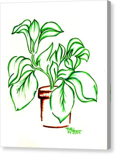 466x622 Plant Drawing By Judith Herbert