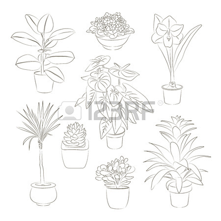 450x450 Set Of Green House Plants In Pots. Leaf And Flowers. Flowerpot