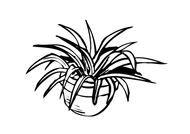 750x531 Coloring Page Houseplant