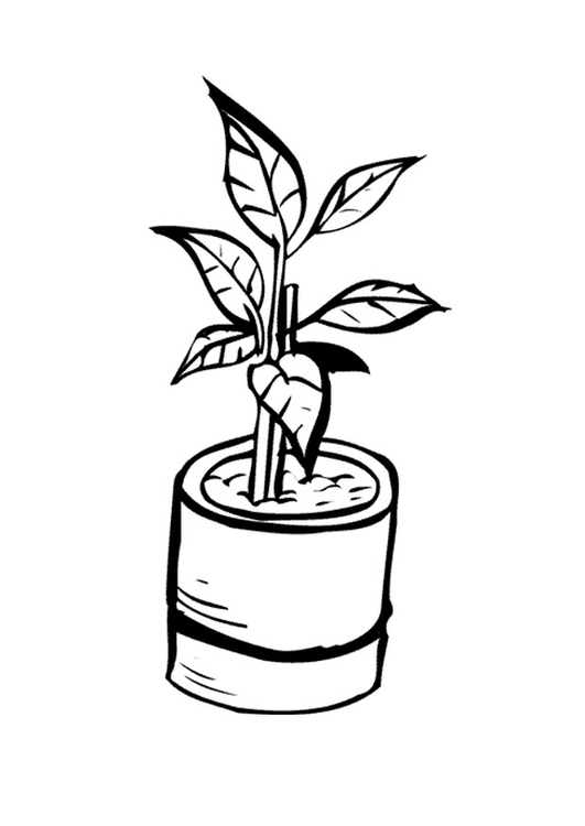 531x750 Coloring Page Houseplant