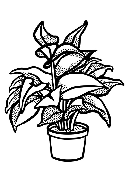 531x750 Coloring Page Indoor Plant