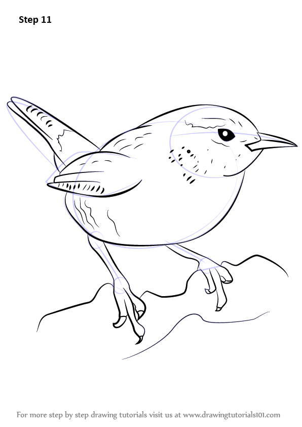 596x842 Learn How To Draw A Wren (Birds) Step By Step Drawing Tutorials