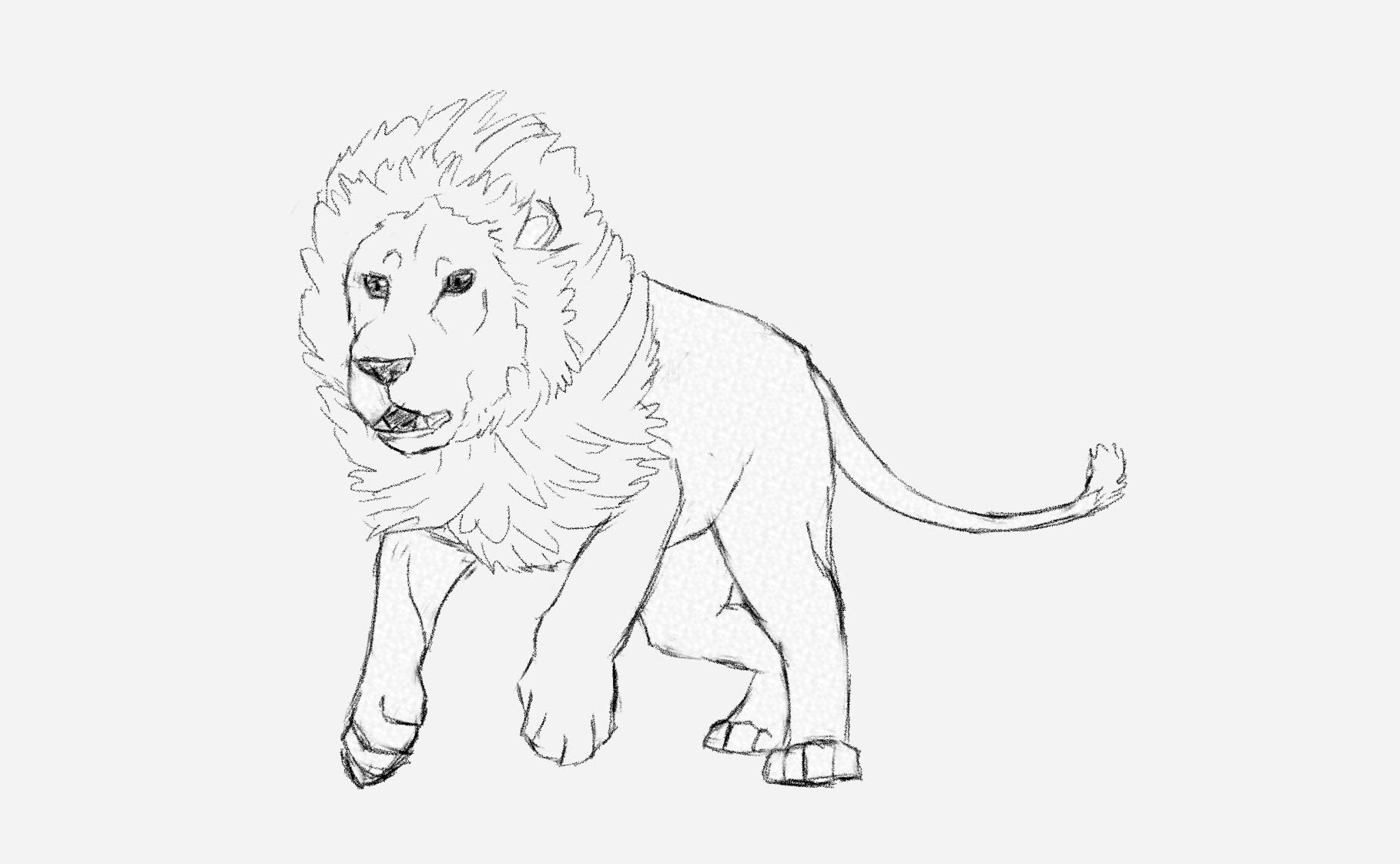 1818x1122 How To Draw A Male Lion Running Art Tutorial