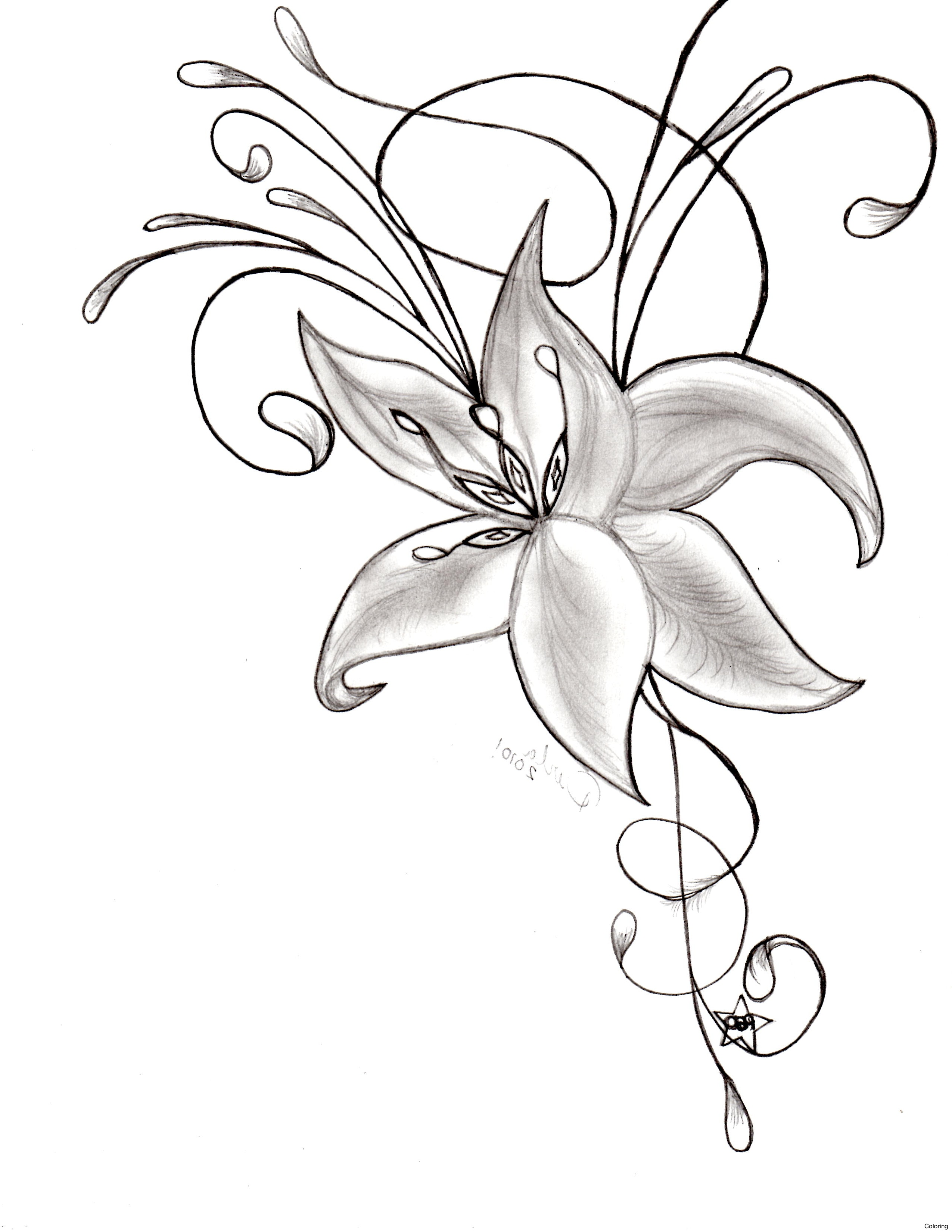 How to make a beautiful flower drawing at getdrawings free for 2550x3300 nice flowers to draw izmirmasajfo