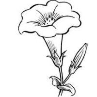200x200 Beautiful Flower Drawings
