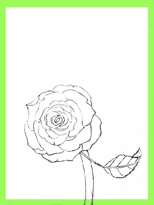 518x690 How To Draw Roses