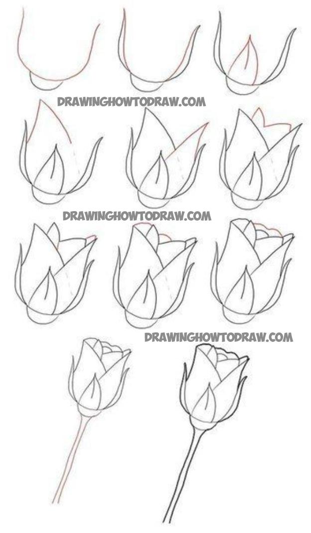 624x1068 Roses Drawing Tutorial