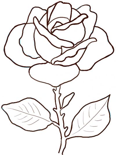 400x536 Drawing Rose