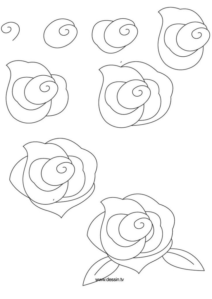 725x1024 How To Draw An Easy Rose Step By Step Easy Rose Drawing Step Step