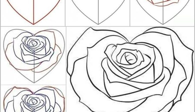 736x425 Step By Step Drawing A Rose Best 25 Rose Drawings Ideas
