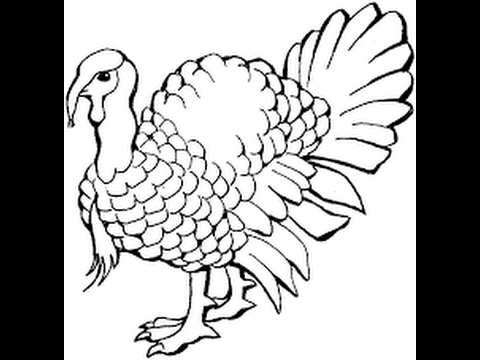 480x360 How To Draw Domesticated Turkey Drawing Step By Step