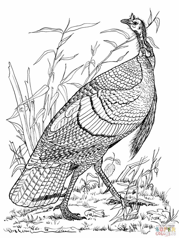 736x981 81 best turkeys images on pinterest coloring books coloring - Free Coloring Pages Of Turkeys 3