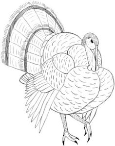 236x298 The King Of Wild Turkey Coloring Pages Turkeys