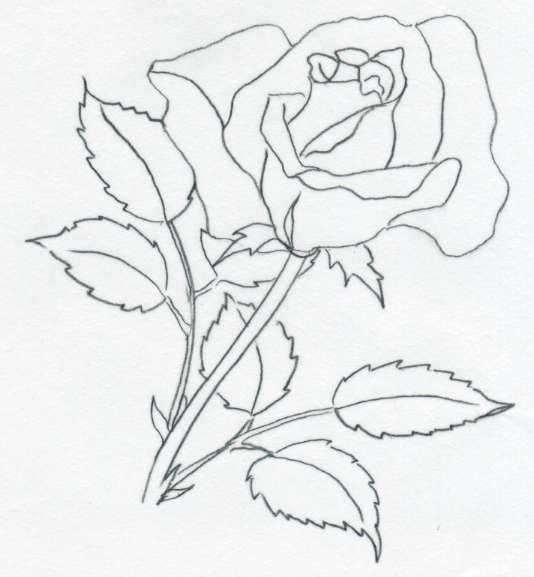 534x577 Drawing Of Rose Template Business