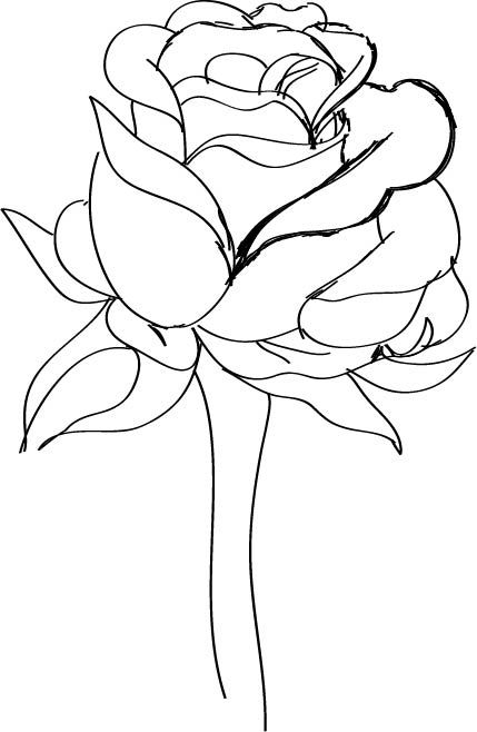 429x658 How To Draw A Red Rose 9 Steps