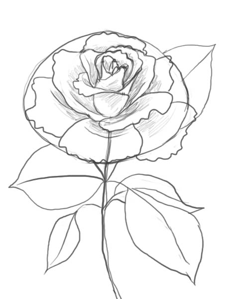 488x600 How To Draw A Rose