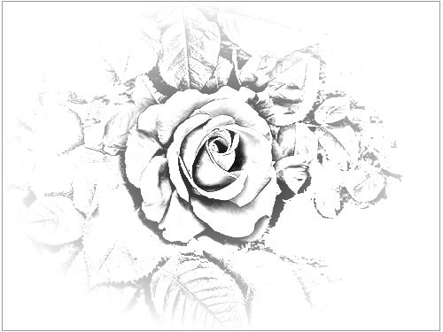 500x375 Pencil Drawings Of Roses, Altered Rose Art, And Rose Sketches