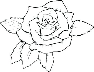 400x307 Coloring Pages Roses Murs