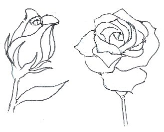 329x266 How To Draw Roses
