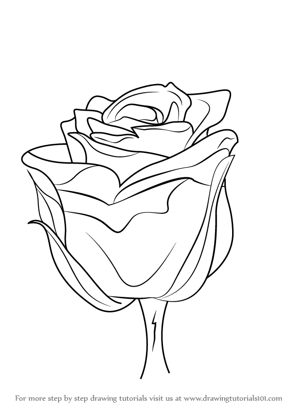598x844 Learn How To Draw A Rose With Stem (Rose) Step By Step Drawing