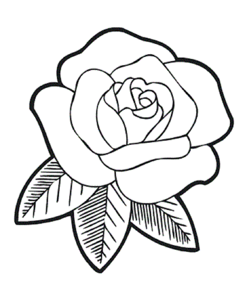 837x1024 Rose Flower Drawing Images Surprising Coloring Pages Draw Easy