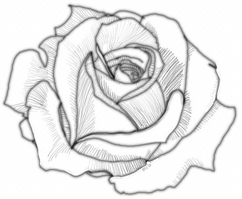 500x411 Coloring Pages Marvelous Drawn Rose How To Draw A Rose46