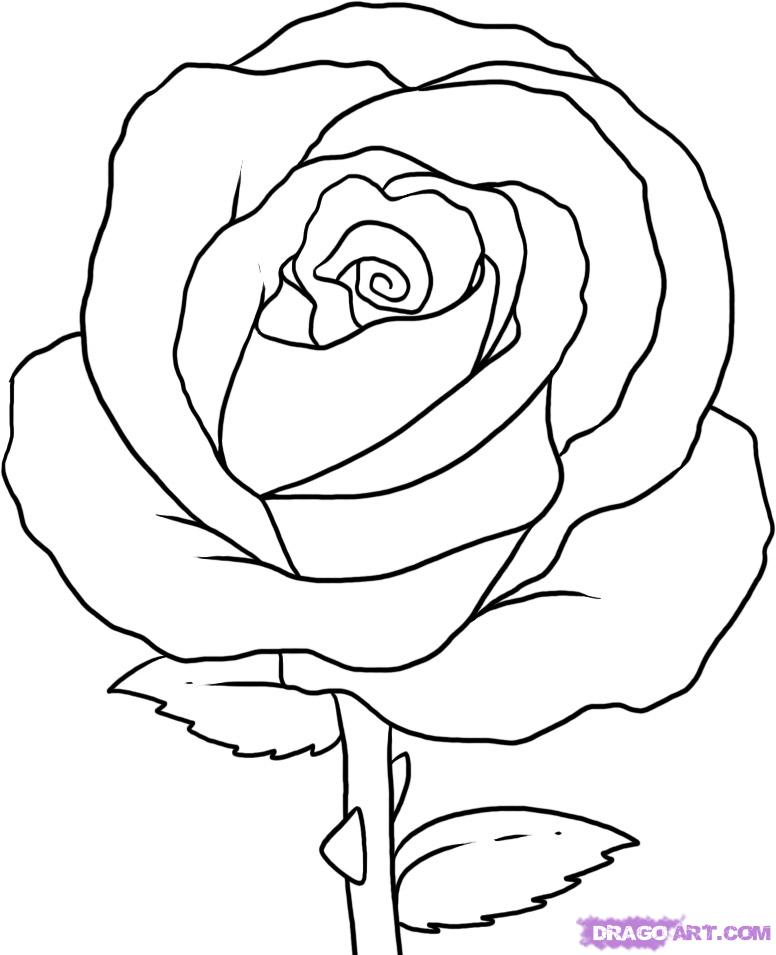 776x955 How To Draw Simple How To Draw A Simple Rose, Step By Step