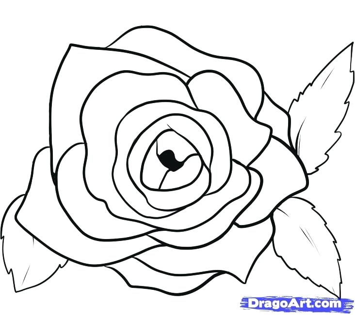 732x651 Drawn Rose Draw Rose Petals Step 8 Drawn Rose Petals Affan
