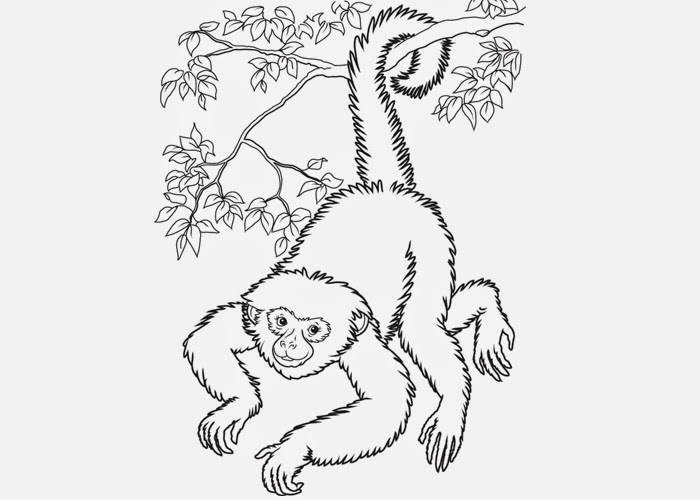 Howler Monkey Drawing