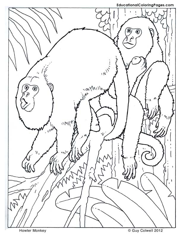612x792 Howler Monkey Coloring Pages