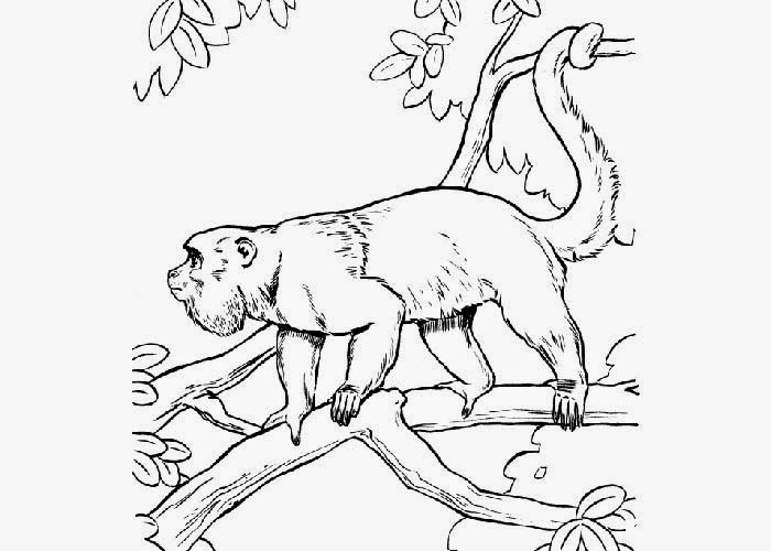 700x500 Howler Monkey Coloring Pages Free Coloring Pages And Coloring