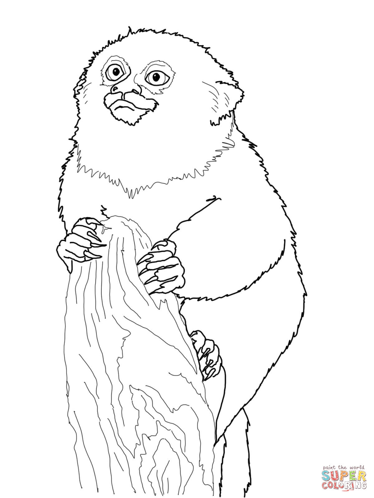 1200x1600 Pygmy Marmoset Monkey Coloring Page Free Printable Coloring Pages