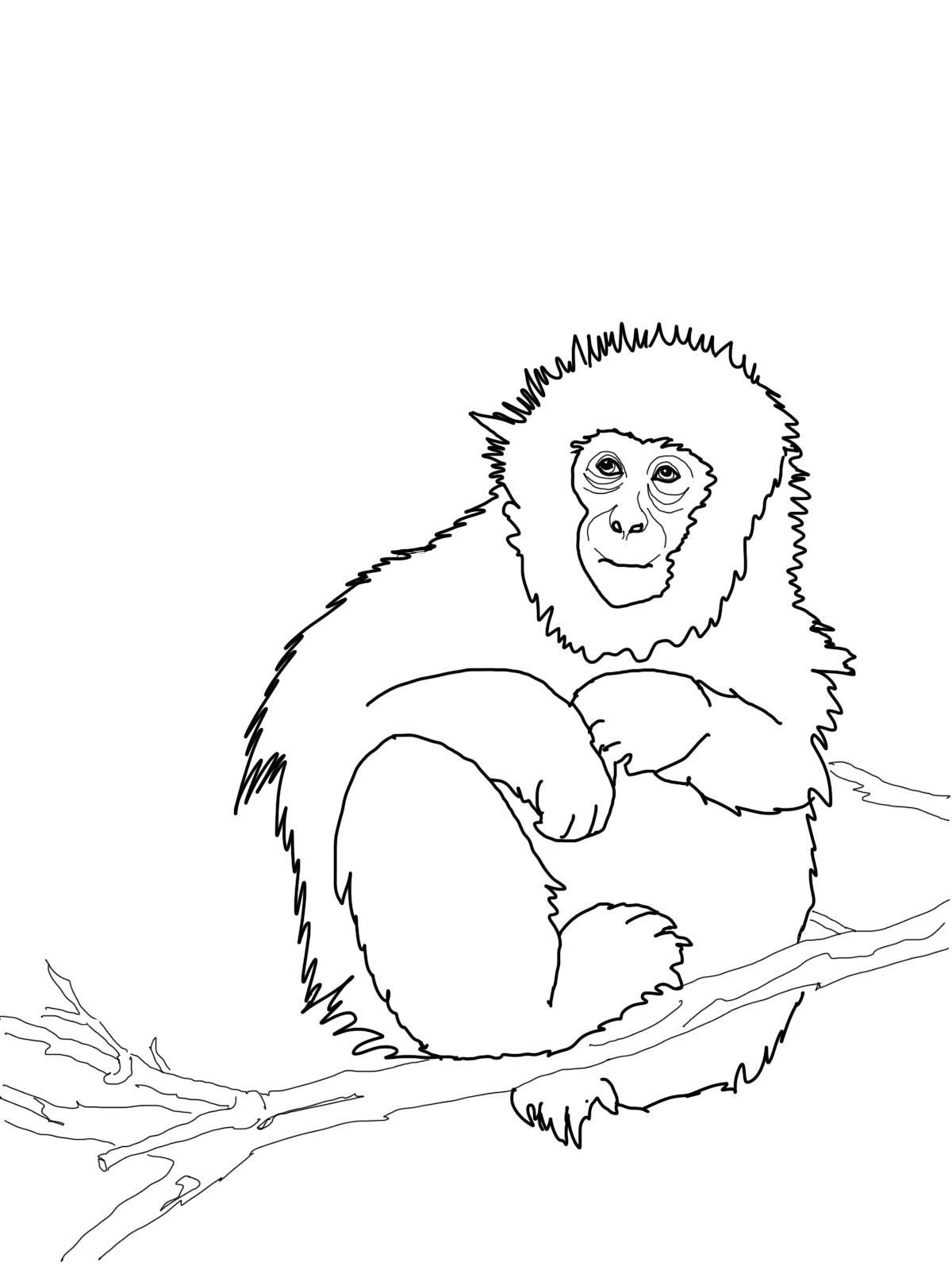 1200x1600 Coloring Howler Monkey Coloring Page Sheets Sheet. Howler Monkey
