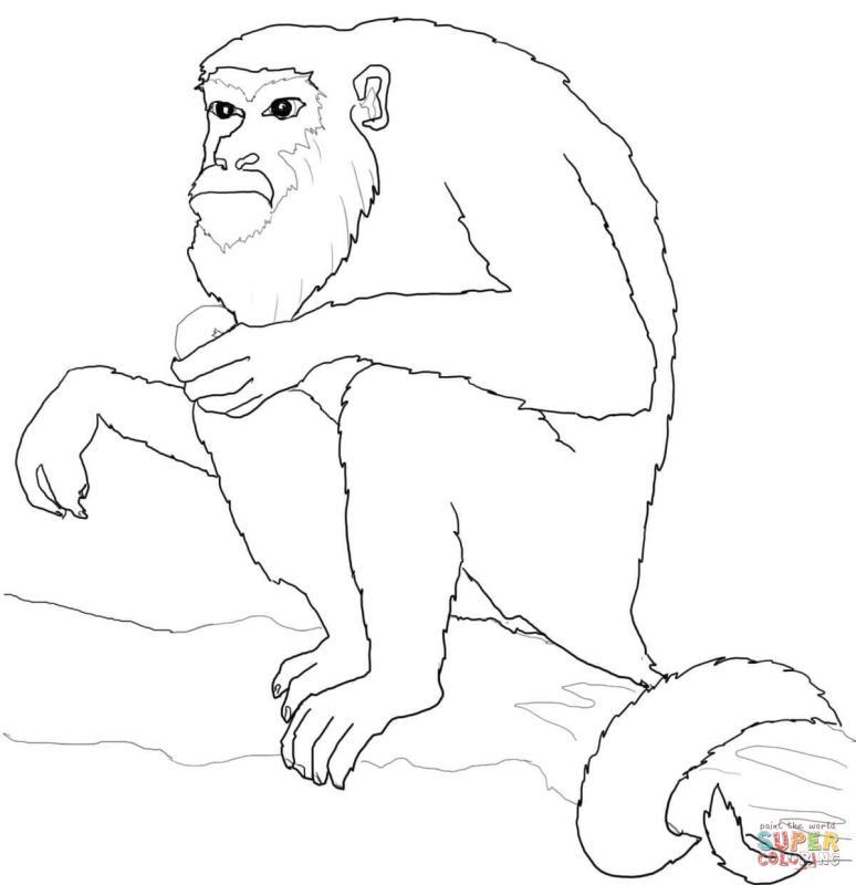 774x800 Howler Monkey Clipart