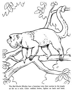 236x288 Camping Coloring Pages And Sheets For Adults And Kids Raccoons