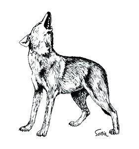 281x300 Howling Wolf Drawings Fine Art America