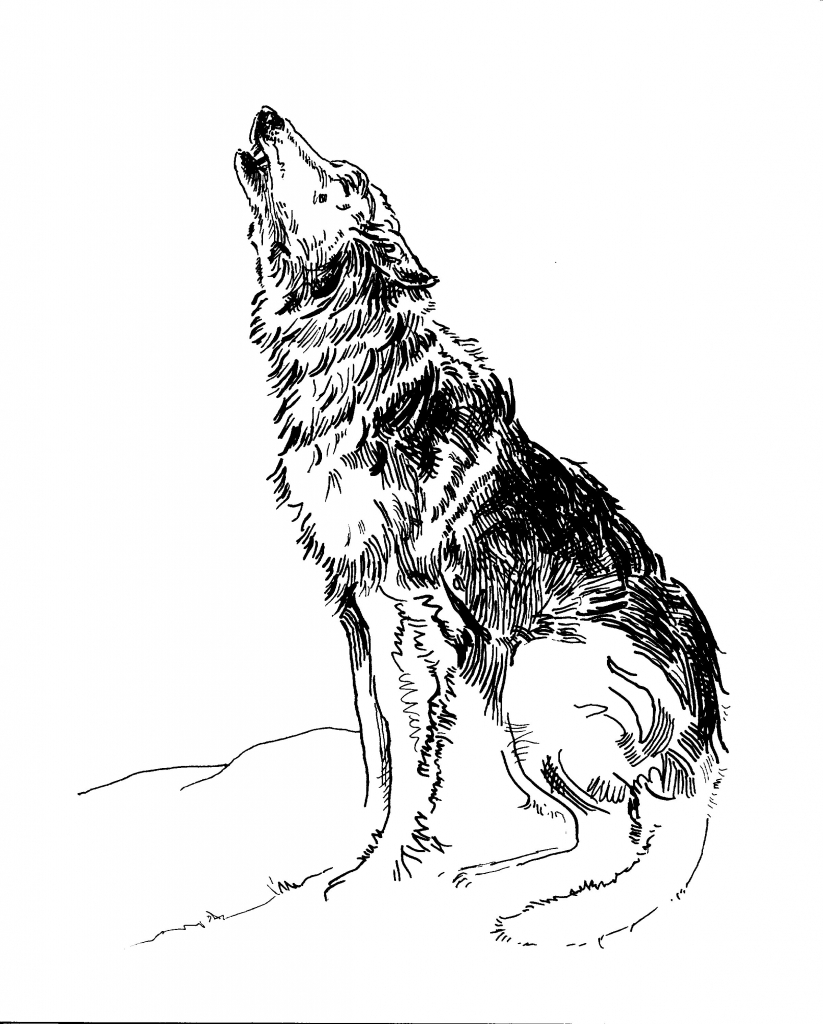 823x1024 Wolf Howling Drawing Howling Wolf