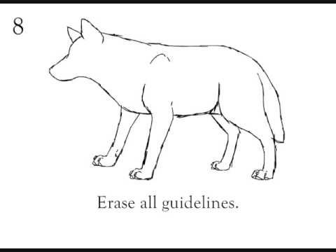 480x360 How To Draw A Wolf Step By Step Beginner Tutorial Art How 2