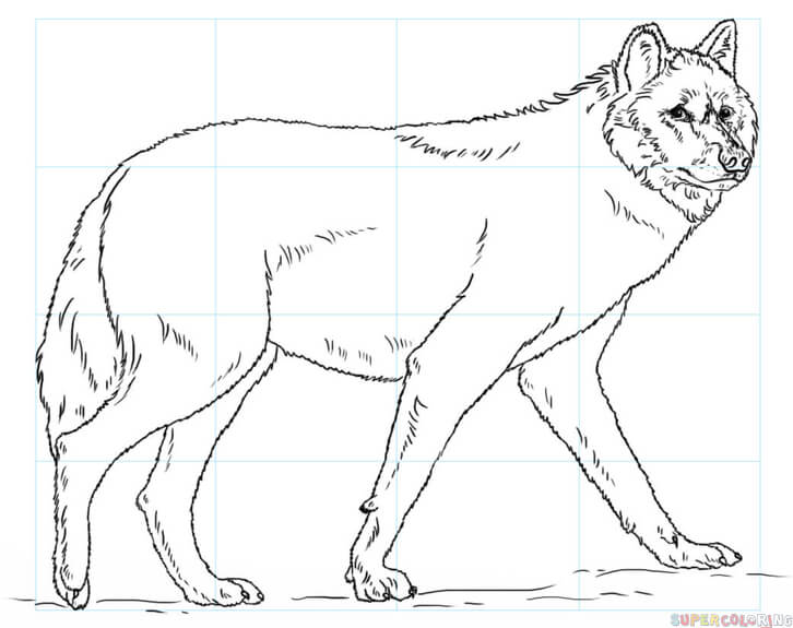 726x575 How To Draw A Wolf Step By Step Drawing Tutorials