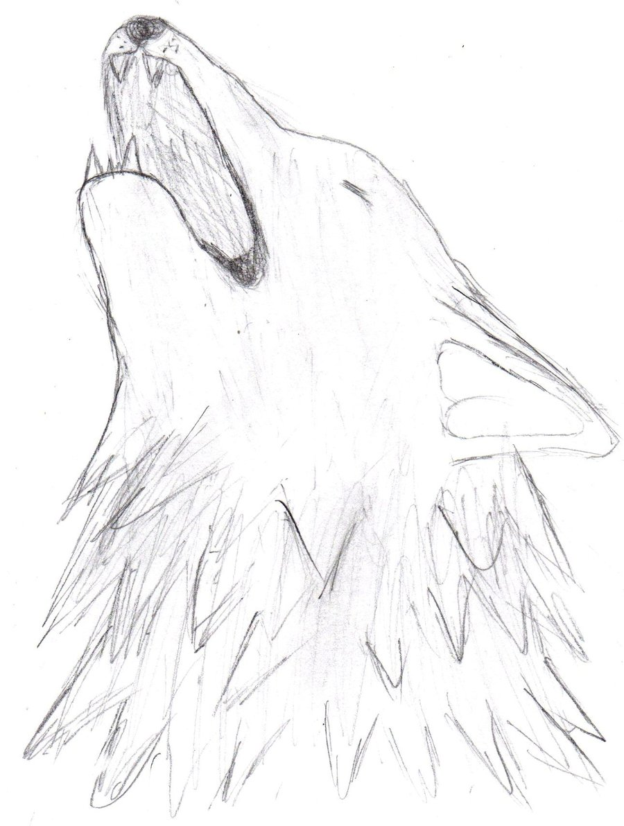 900x1192 Howling Wolf Head Drawing