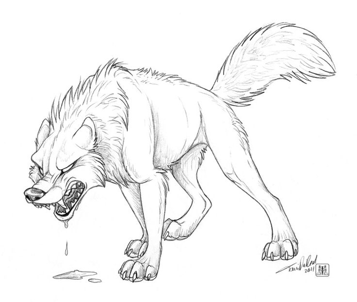 736x623 A Wolf Drawing Anyone Can Do. How To Draw Wolf Howling In Easy