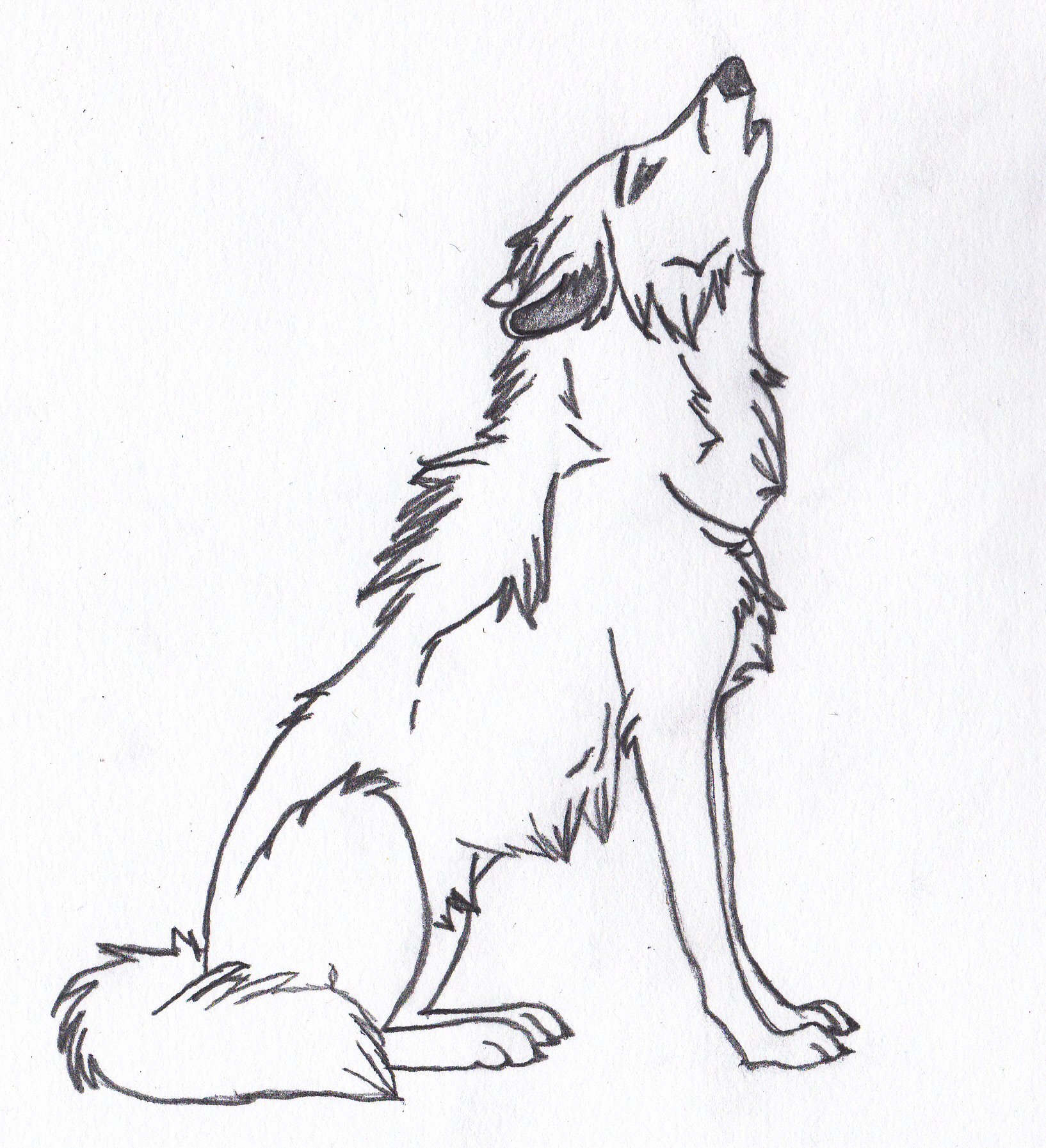 1634x1793 A Wolf Howling My Drawings Drawings