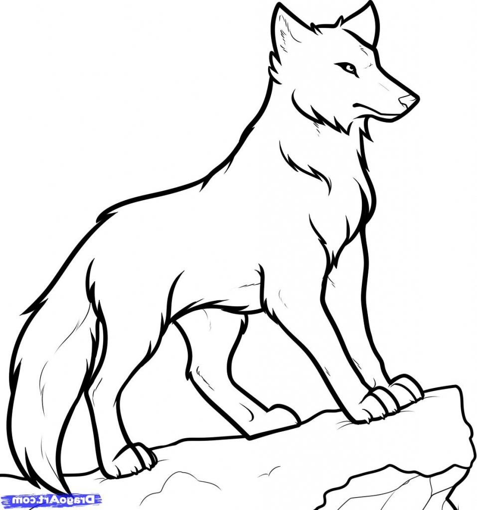 957x1024 Drawing Of A Wolf How To Draw Wolf Howling In Easy Steps