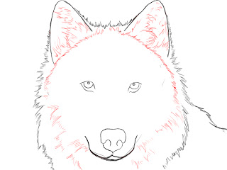 320x240 How To Draw A Wolf