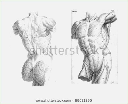 450x366 Anatomy Drawings Of The Human Body