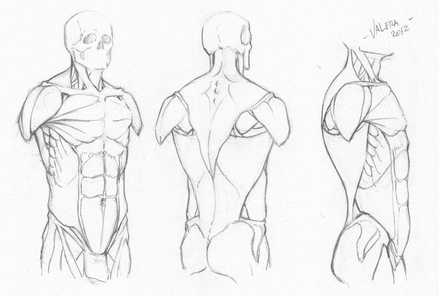 900x608 Random Anatomy Sketches 7 By Rv1994