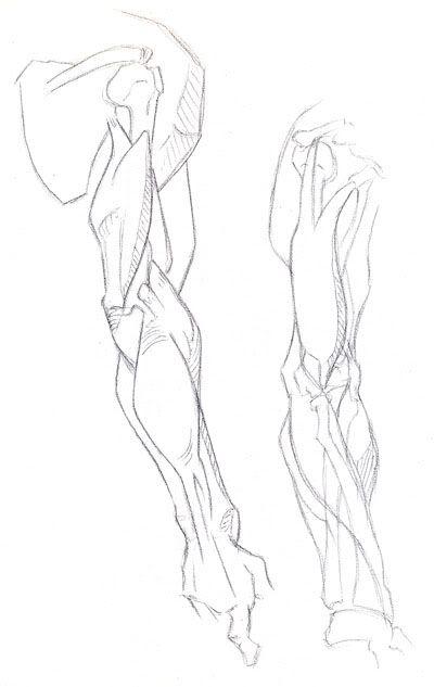 Human Body Drawing Template At Getdrawings Com