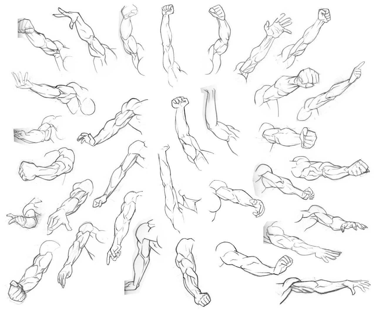 1280x1073 Drawing Art People Arms Draw Hand Human Anatomy Muscles Biceps
