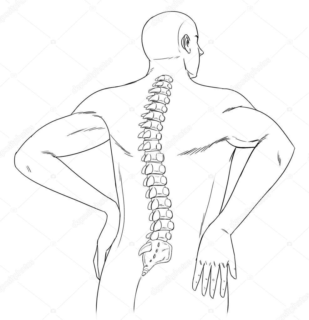 988x1023 Human Spine Stock Vector Blueringmedia