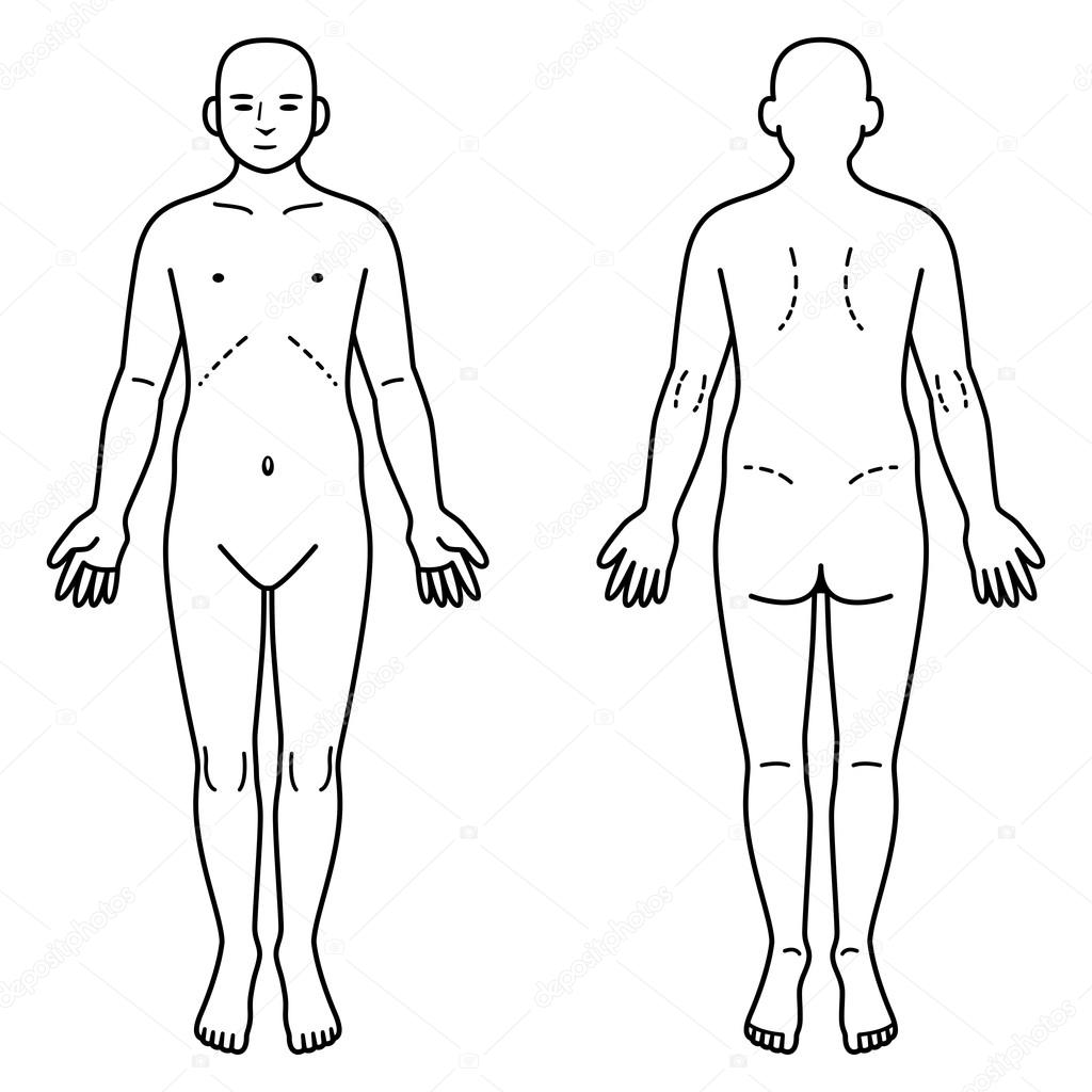1024x1024 Human Body Front And Back Stock Vector Ankomando